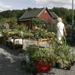 Växtförsäljningen är alltid populär.