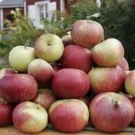 Äpplen, äpplen, äpplen!!